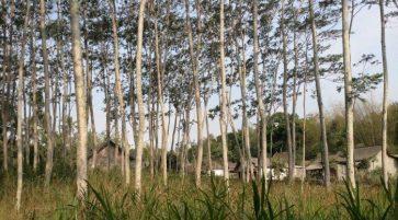 Bulan Menanam Pohon Nasional, Sampoerna Kayoe Tanam 67 Juta Pohon